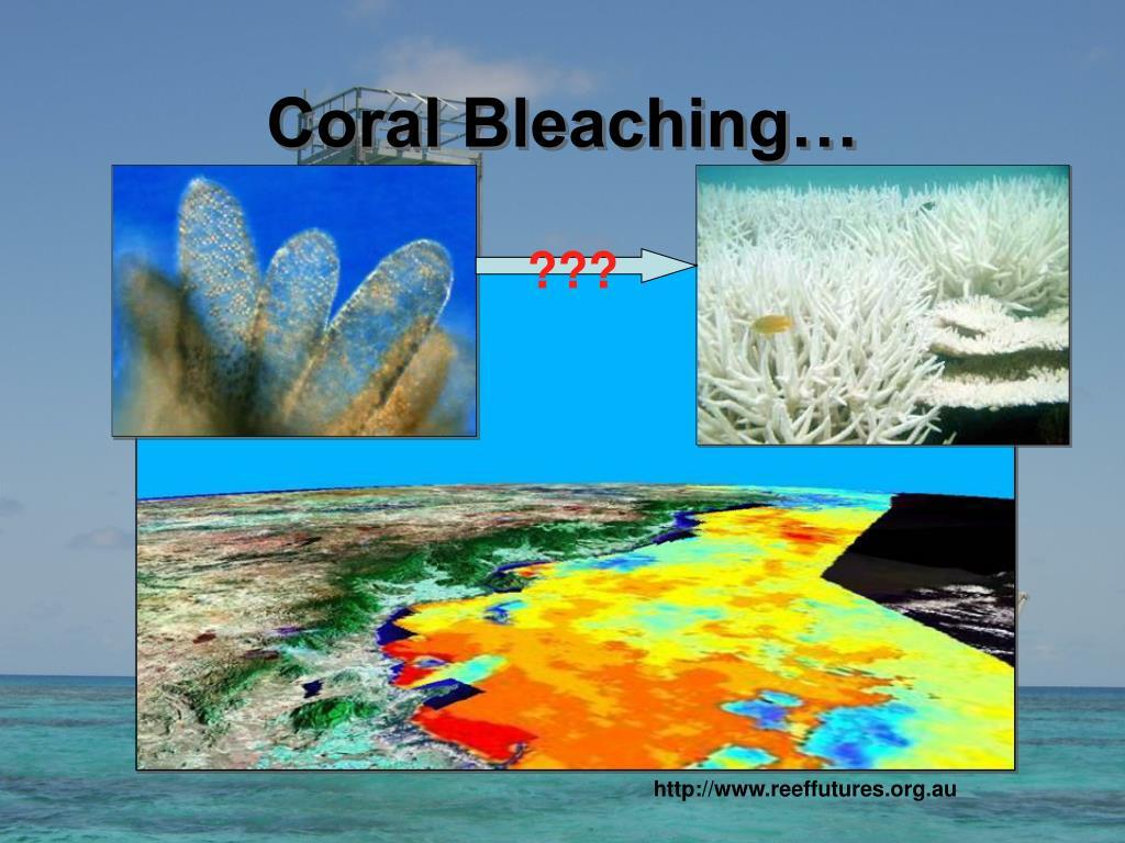 Coral Bleaching…