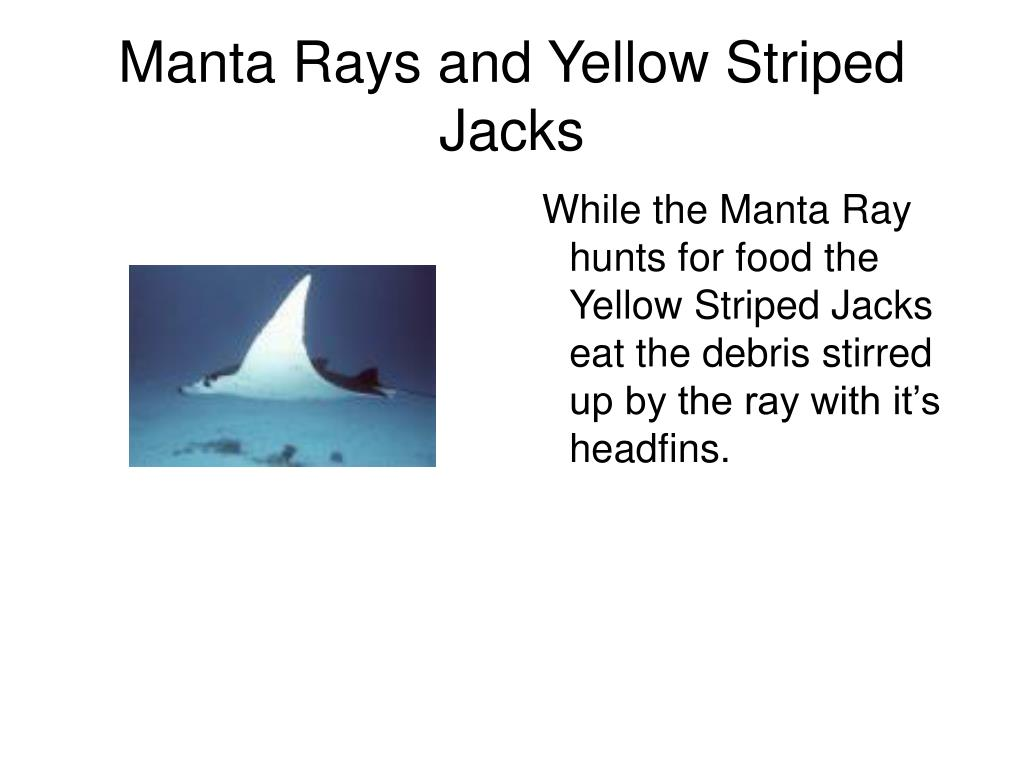 Manta Rays and Yellow Striped Jacks