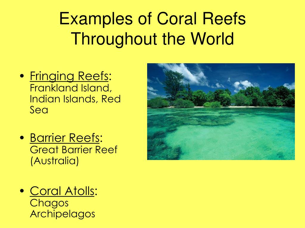 Examples of Coral Reefs Throughout the World
