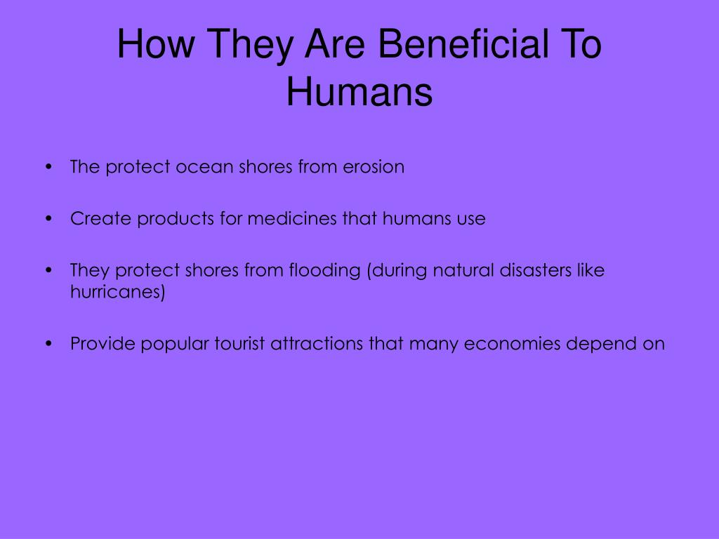 How They Are Beneficial To Humans