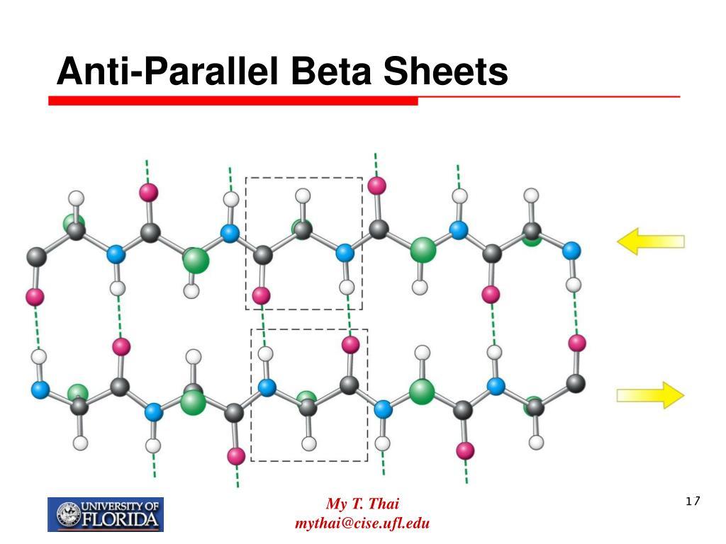Anti-Parallel Beta Sheets