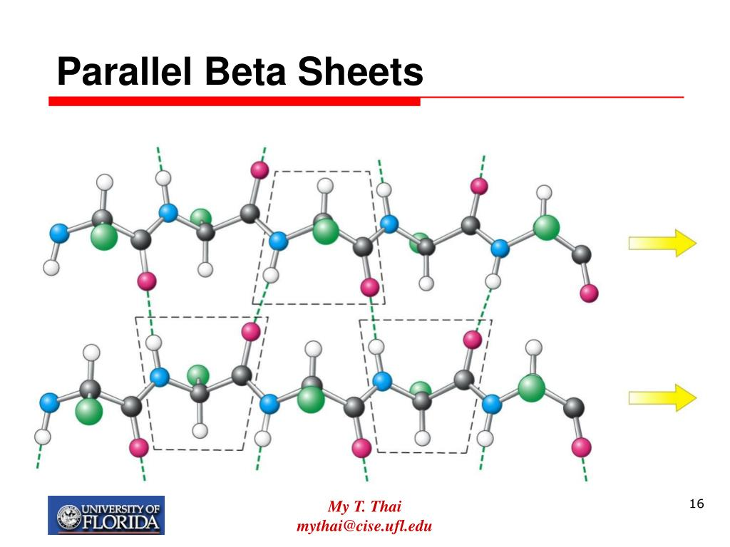 Parallel Beta Sheets