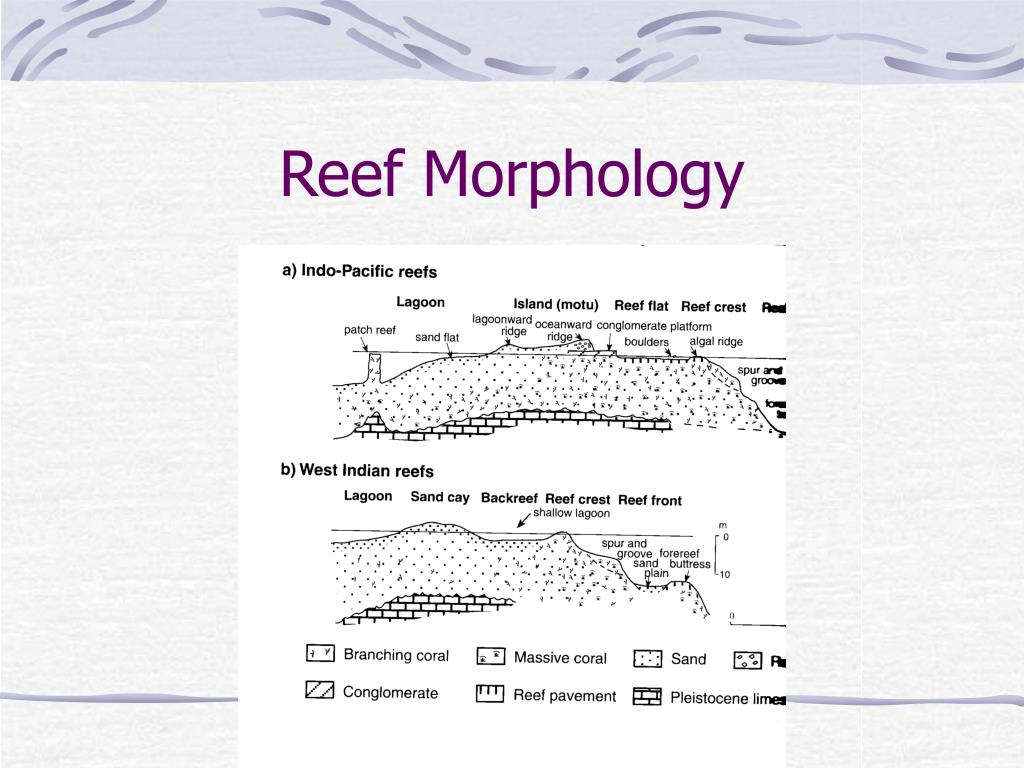 Reef Morphology