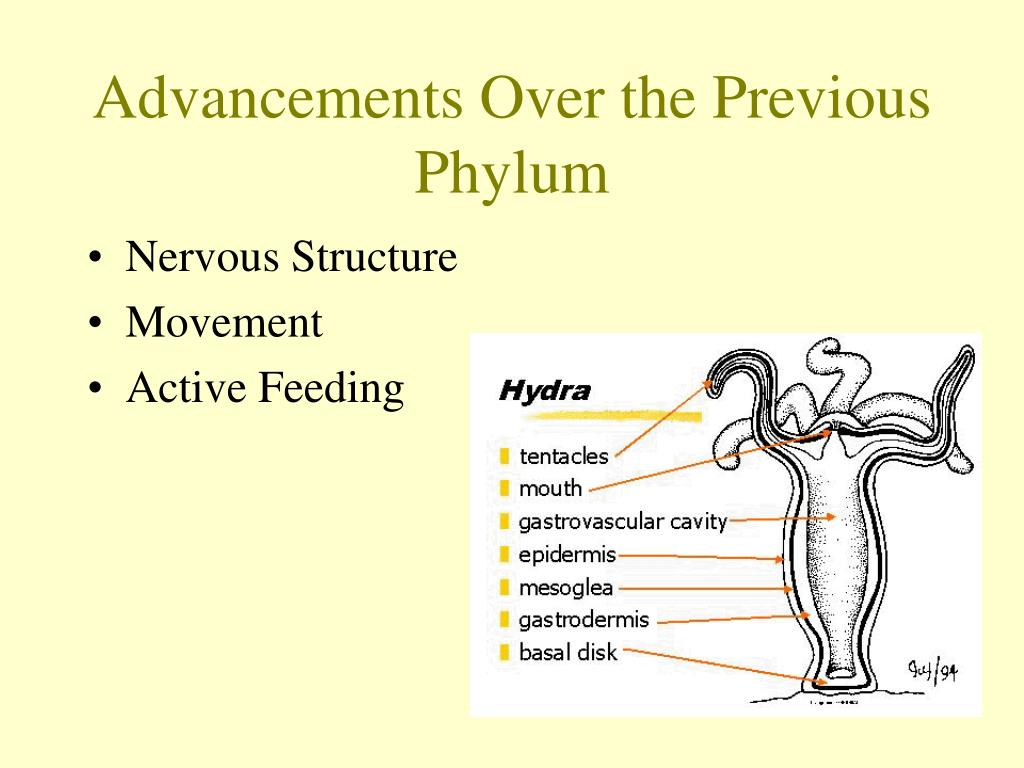 Advancements Over the Previous Phylum