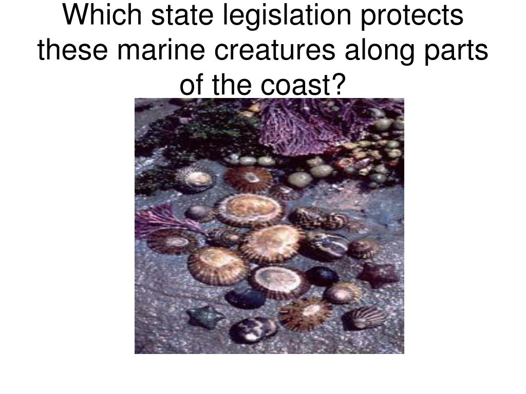 Which state legislation protects these marine creatures along parts of the coast?