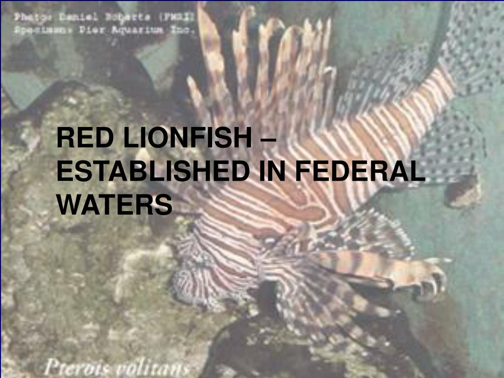 RED LIONFISH – ESTABLISHED IN FEDERAL WATERS