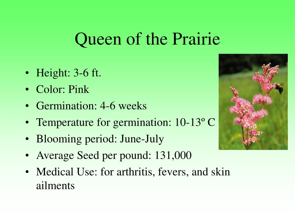 Queen of the Prairie