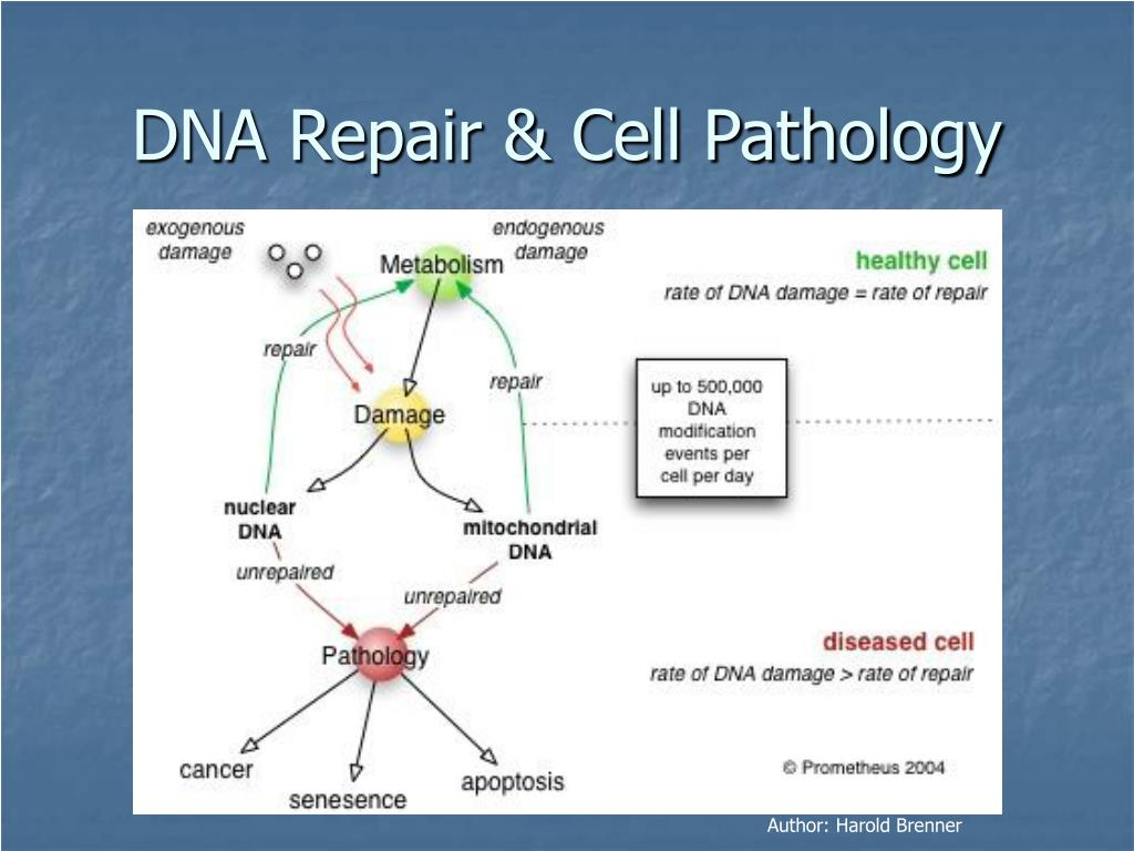 DNA Repair & Cell Pathology