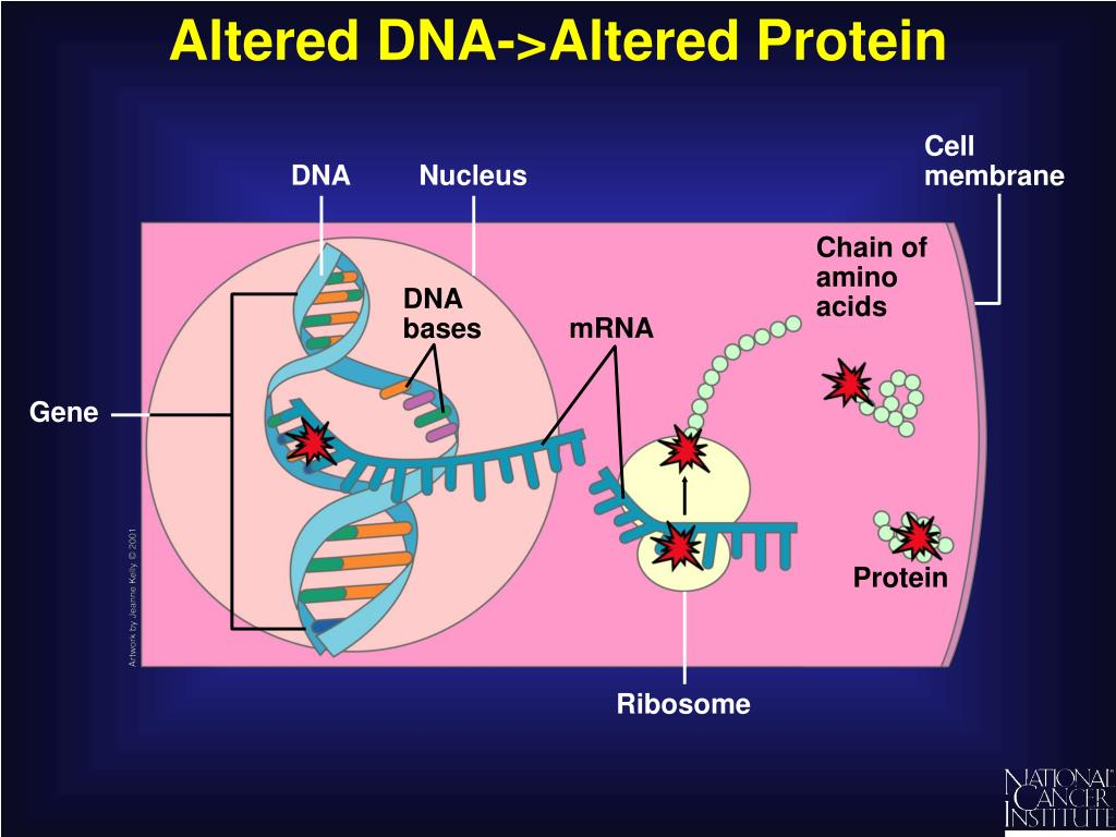 Altered DNA->Altered Protein
