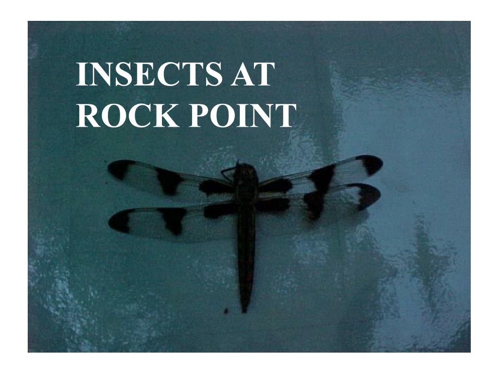 INSECTS AT ROCK POINT