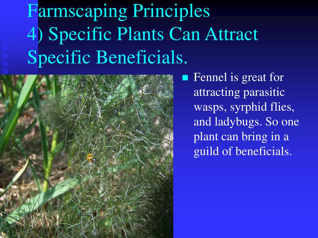 Farmscaping Principles