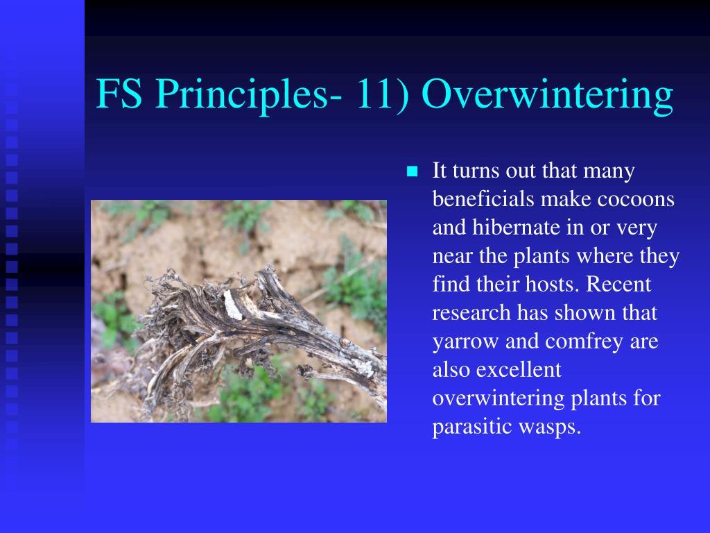 FS Principles- 11) Overwintering