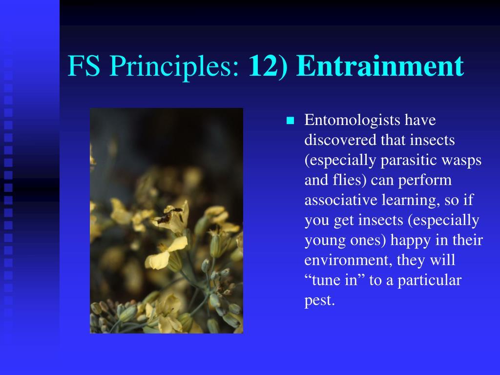 FS Principles: