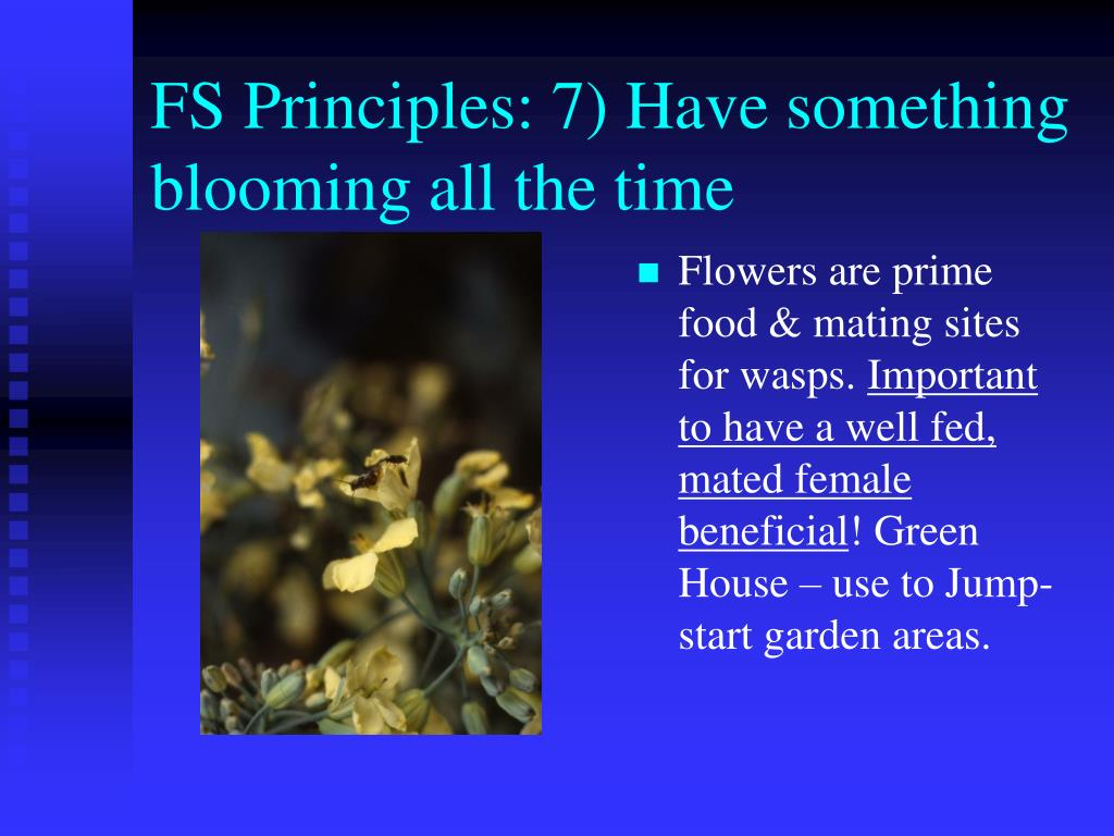 FS Principles: 7) Have something blooming all the time