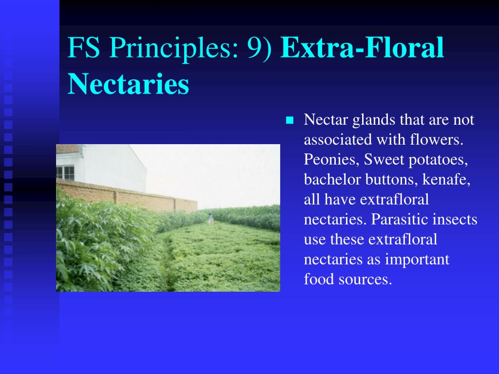FS Principles: 9)