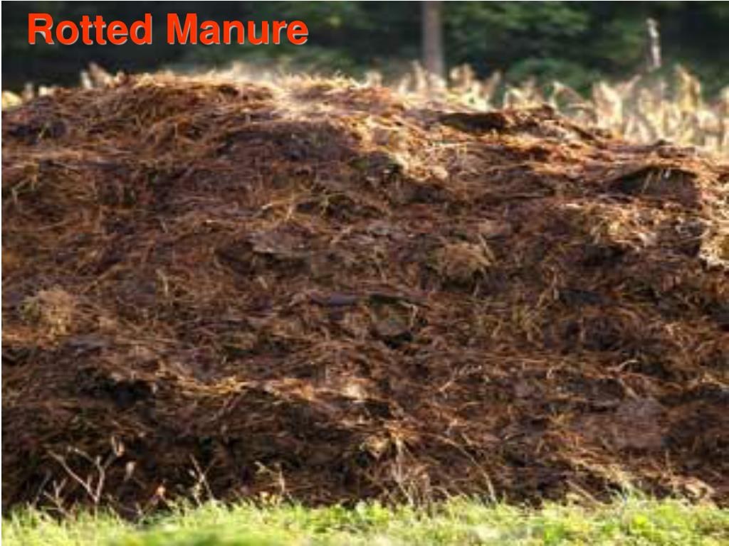 Rotted Manure