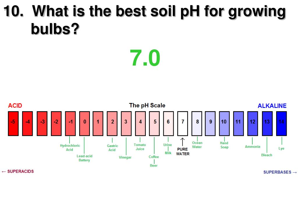 10.  What is the best soil pH for growing     bulbs?