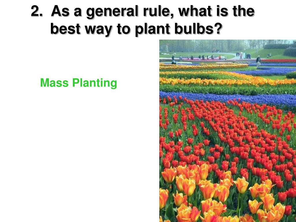 2.  As a general rule, what is the   best way to plant bulbs?