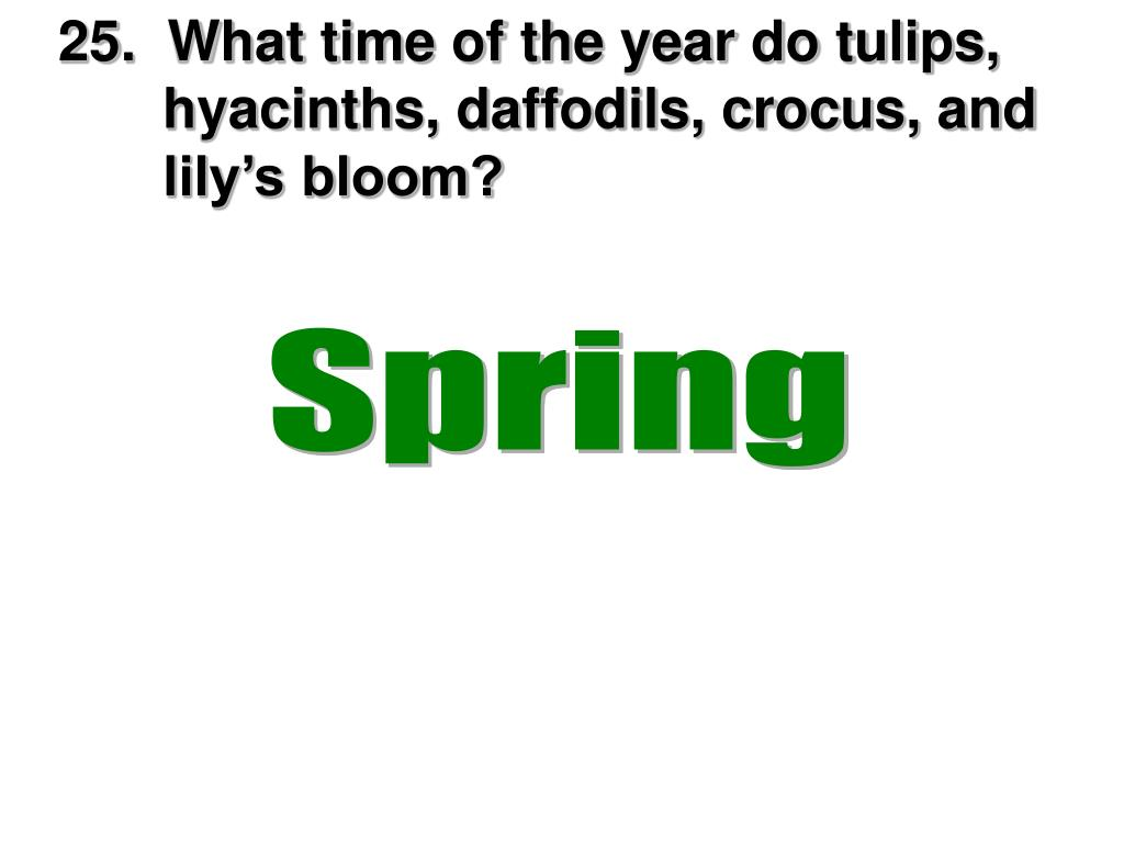 25.  What time of the year do tulips,     hyacinths, daffodils, crocus, and         lily's bloom?