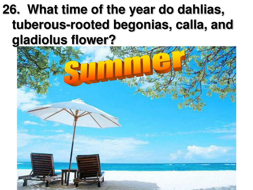26.  What time of the year do dahlias, tuberous-rooted begonias, calla, and gladiolus flower?