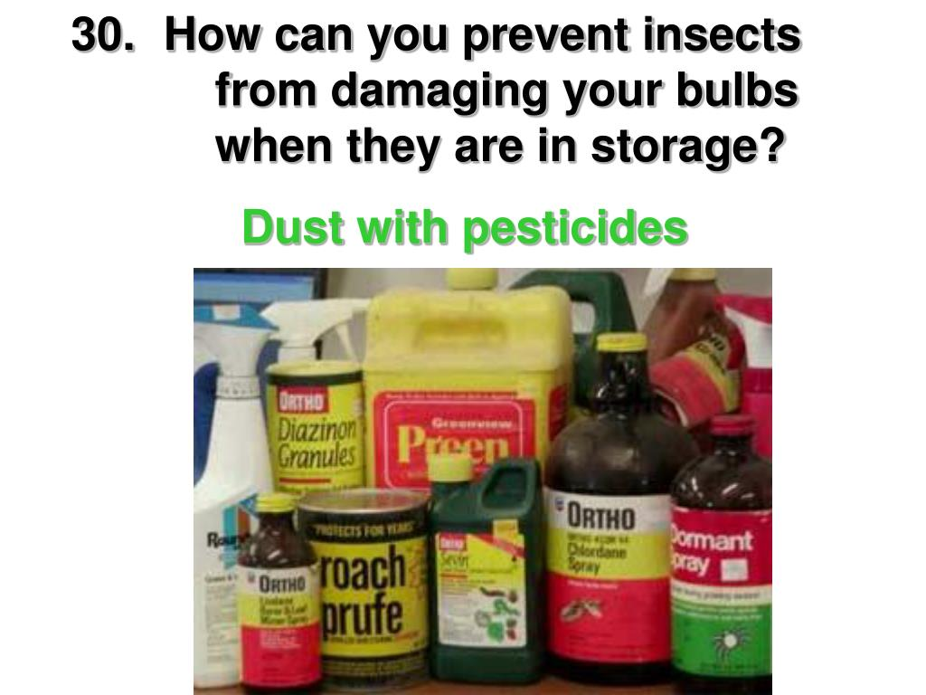 30.How can you prevent insects     from damaging your bulbs        when they are in storage?