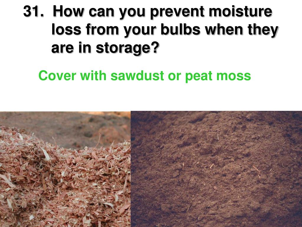 31.  How can you prevent moisture     loss from your bulbs when they     are in storage?