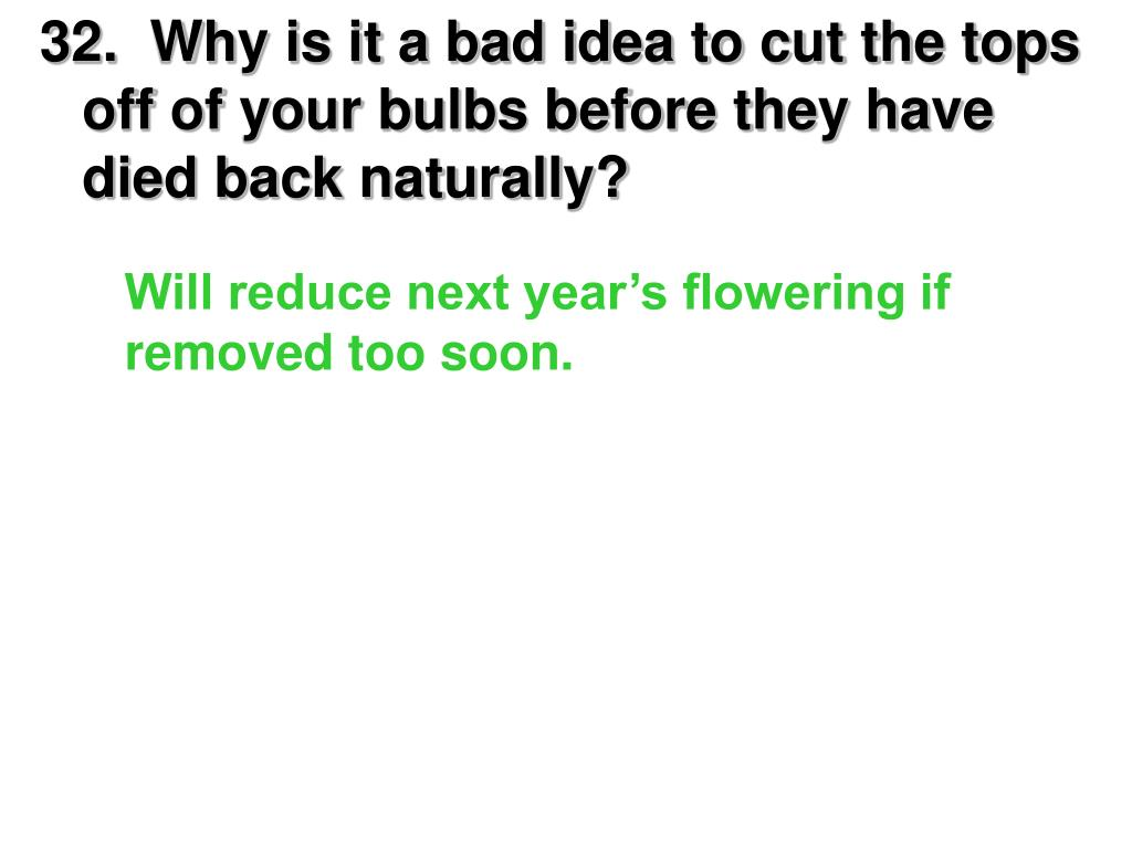 32.  Why is it a bad idea to cut the tops off of your bulbs before they have died back naturally?