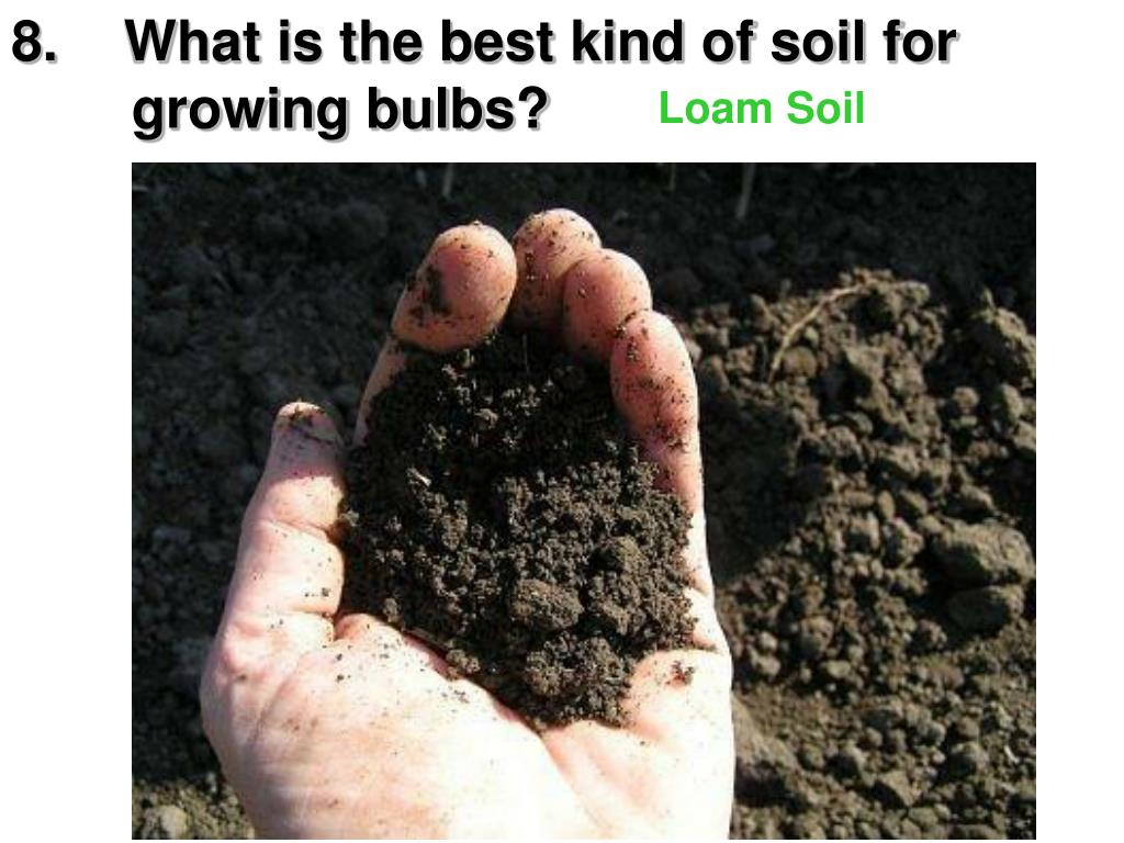 8.What is the best kind of soil for      growing bulbs?