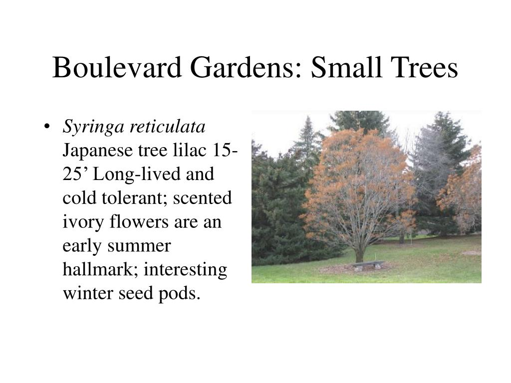 Boulevard Gardens: Small Trees