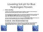 lowering soil ph for blue hydrangea flowers