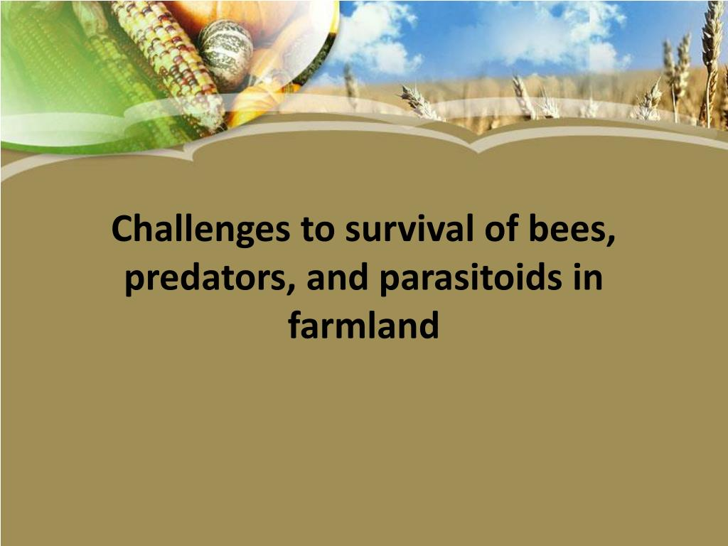 Challenges to survival of bees, predators, and parasitoids in farmland