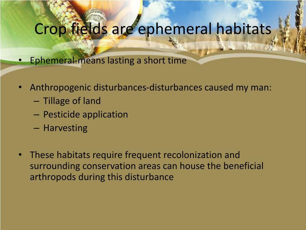 Crop fields are ephemeral habitats