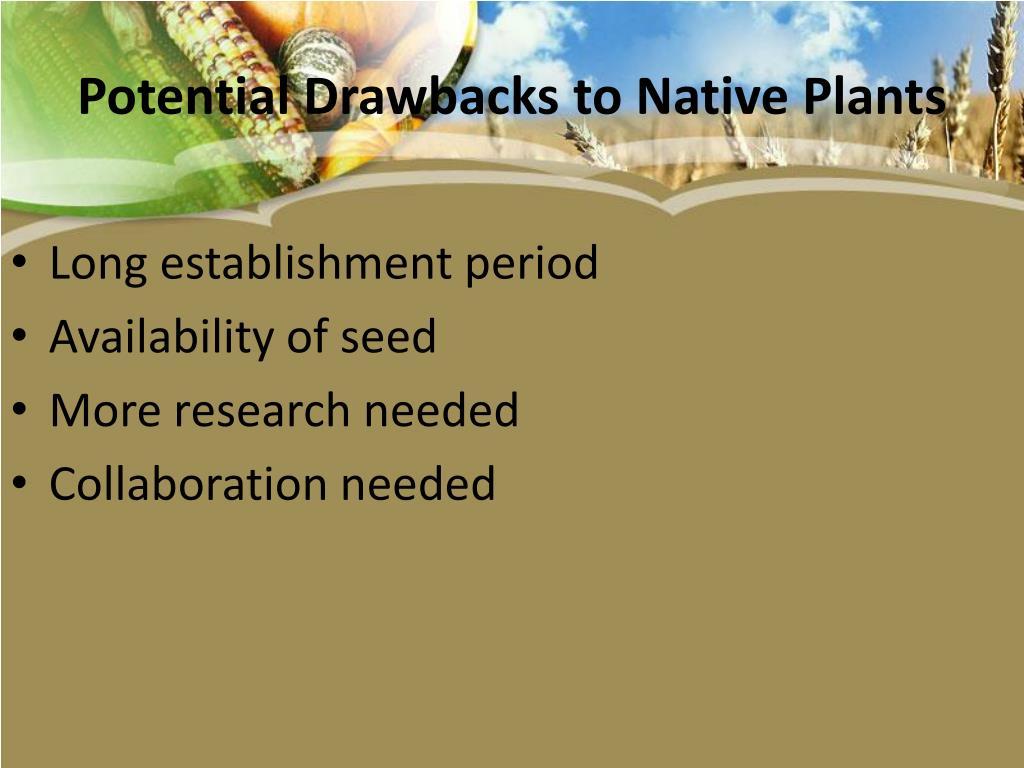 Potential Drawbacks to Native Plants