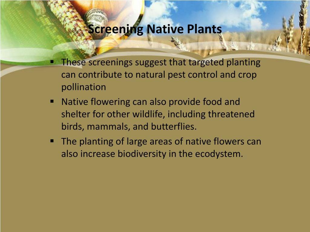 Screening Native Plants