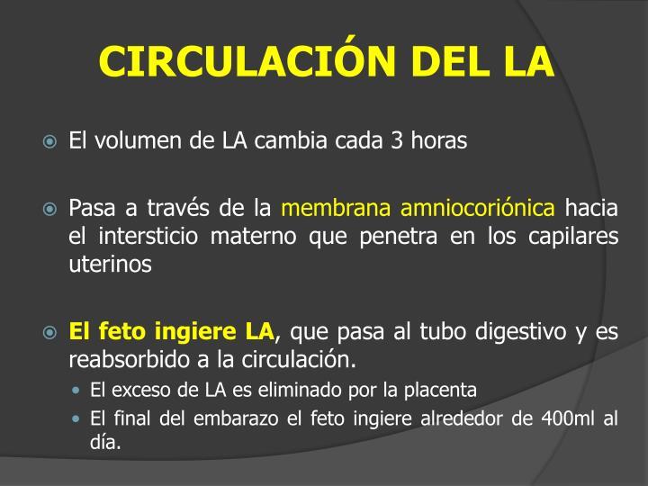 CIRCULACIÓN DEL LA
