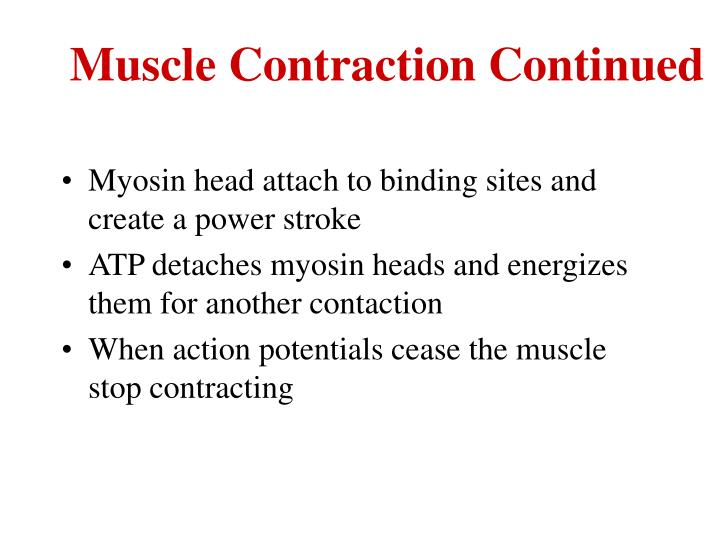 Muscle Contraction Continued
