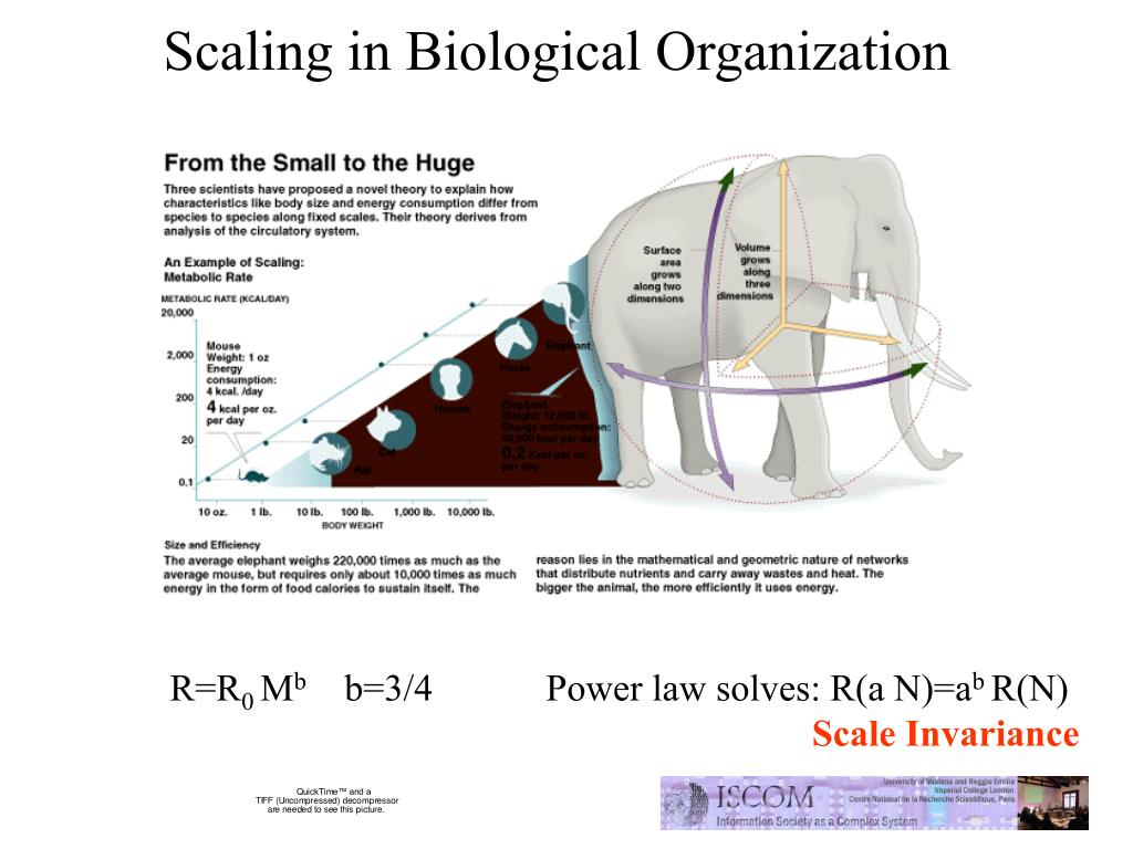 Scaling in Biological Organization
