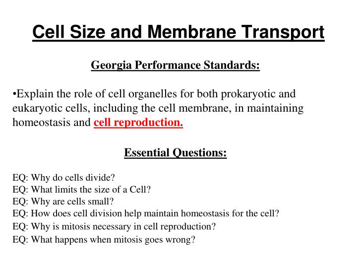 Cell size and membrane transport