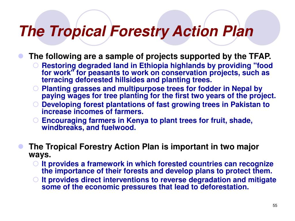 The Tropical Forestry Action Plan