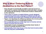 why is most timbering activity destructive to the rain forest