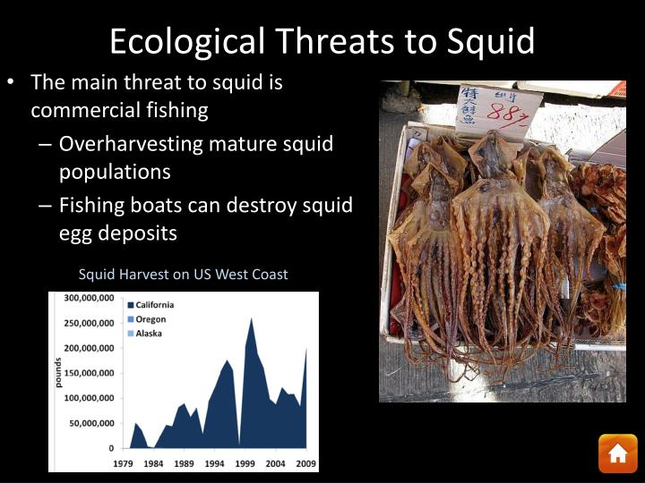 Ecological Threats to Squid