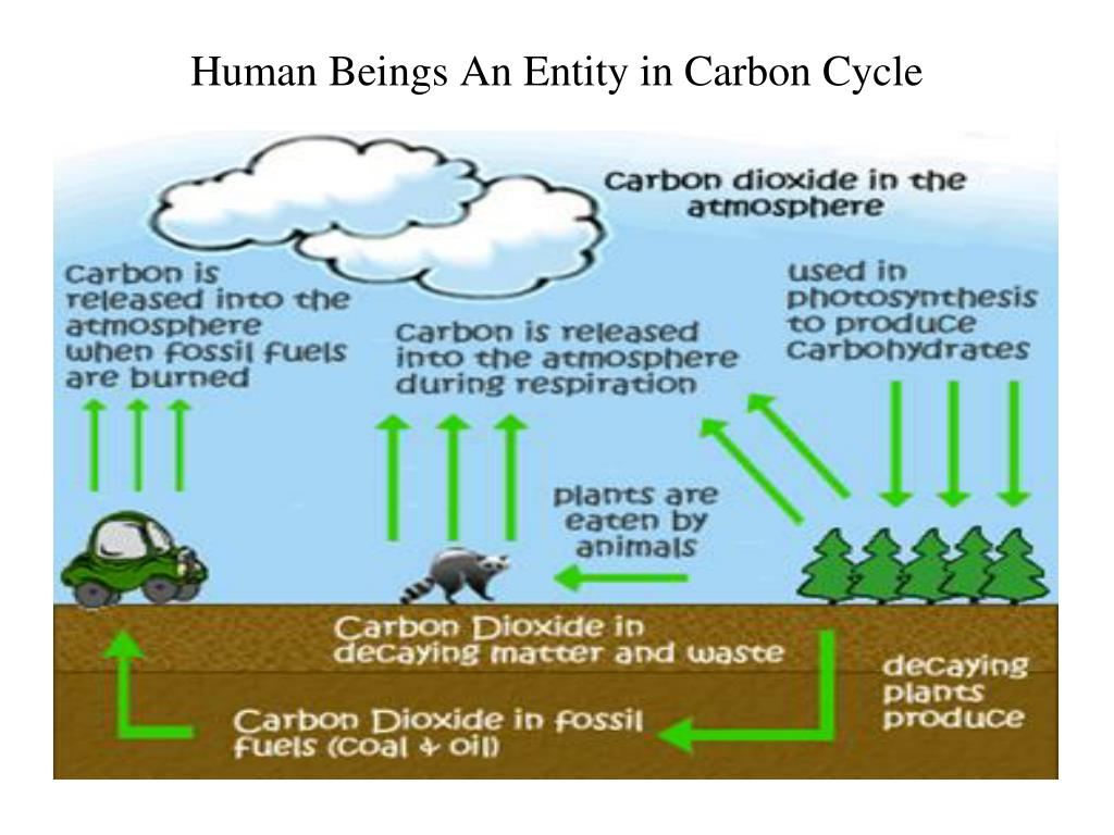 Human Beings An Entity in Carbon Cycle