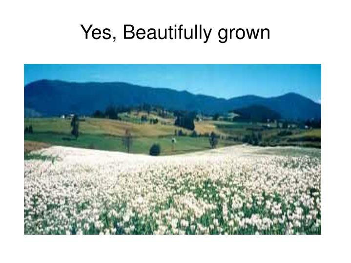 Yes, Beautifully grown