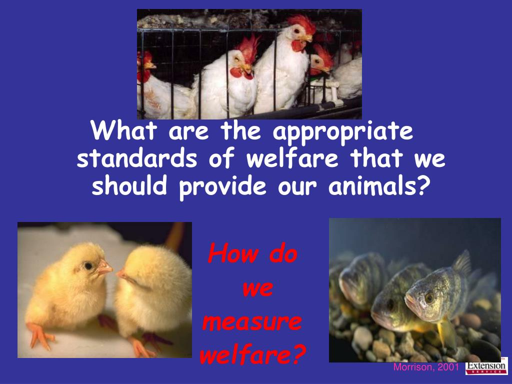 What are the appropriate standards of welfare that we should provide our animals?