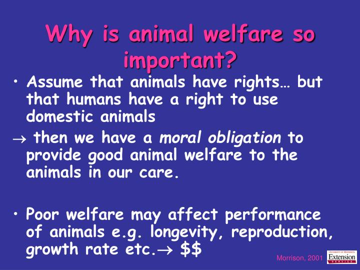 Why is animal welfare so important