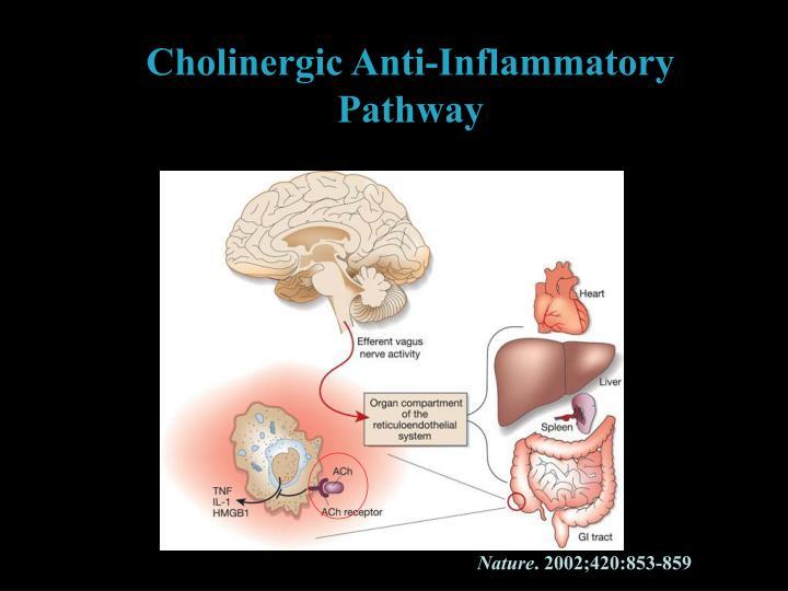 Cholinergic Anti-Inflammatory Pathway