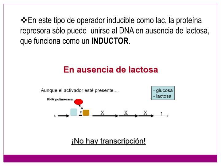 En este tipo de operador inducible como lac, la proteína represora sólo puede  unirse al DNA en ausencia de lactosa, que funciona como un
