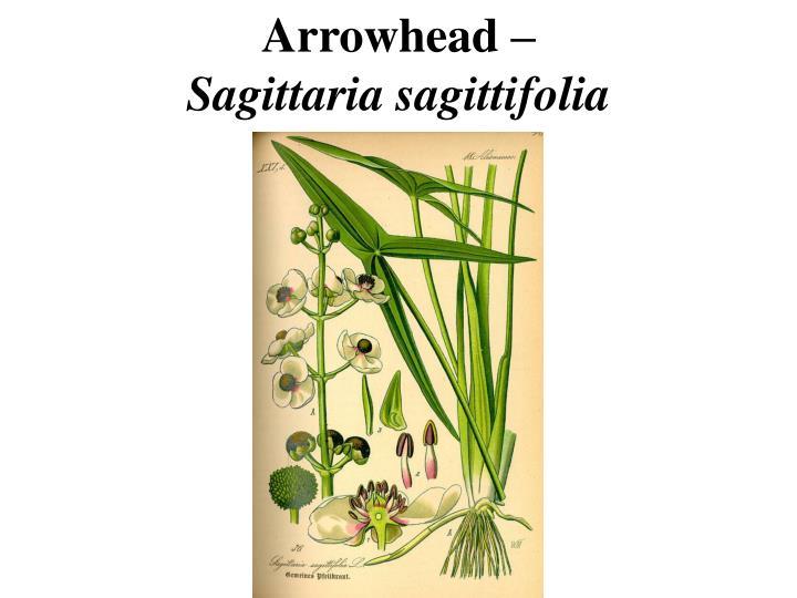 Arrowhead –