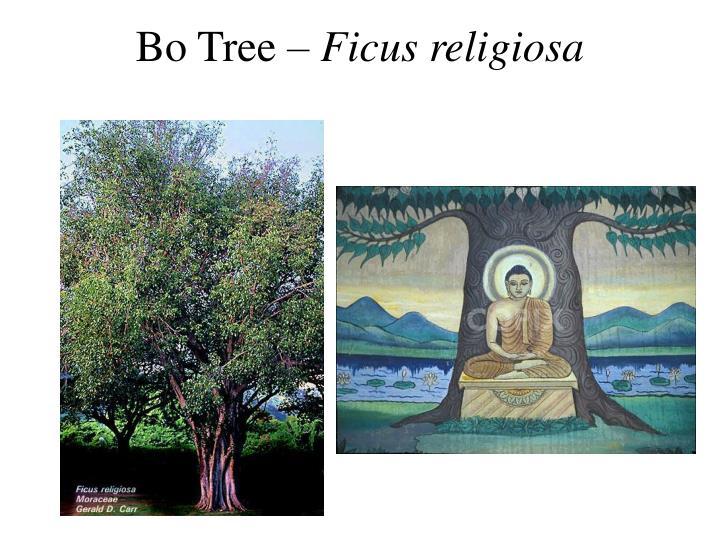 Bo Tree –