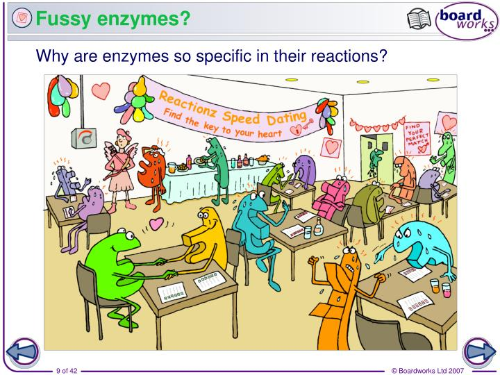 Fussy enzymes?